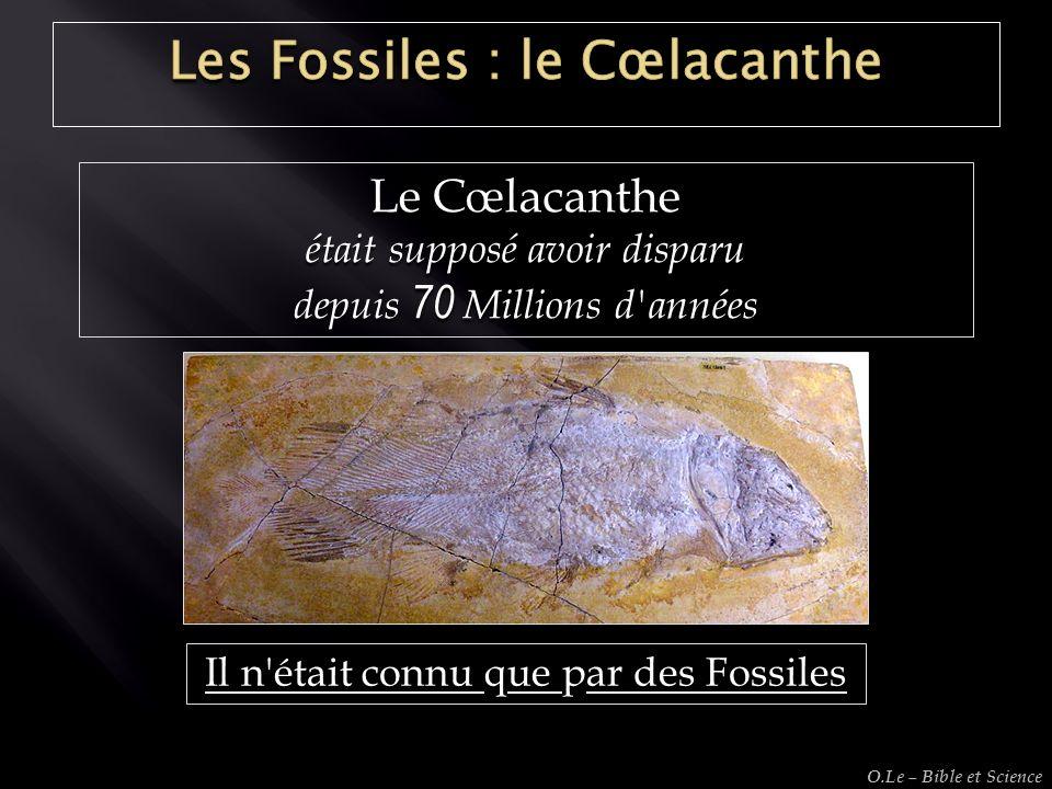 Le Cœlacanthe était supposé avoir disparu depuis 70 Millions d'années Il n'était connu que par des Fossiles O.Le – Bible et Science