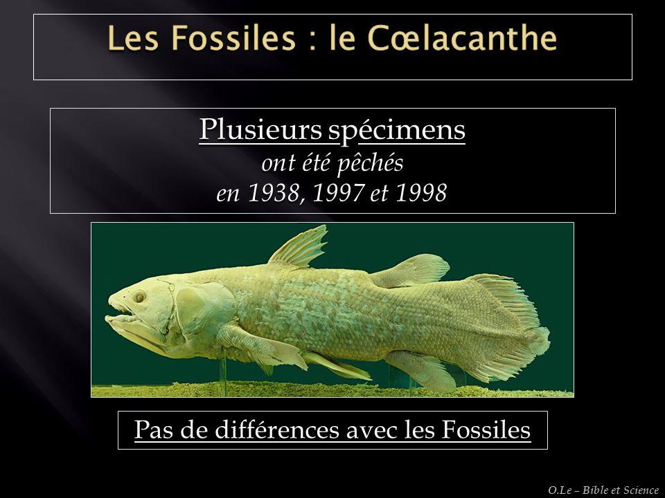 Plusieurs spécimens ont été pêchés en 1938, 1997 et 1998 Pas de différences avec les Fossiles O.Le – Bible et Science