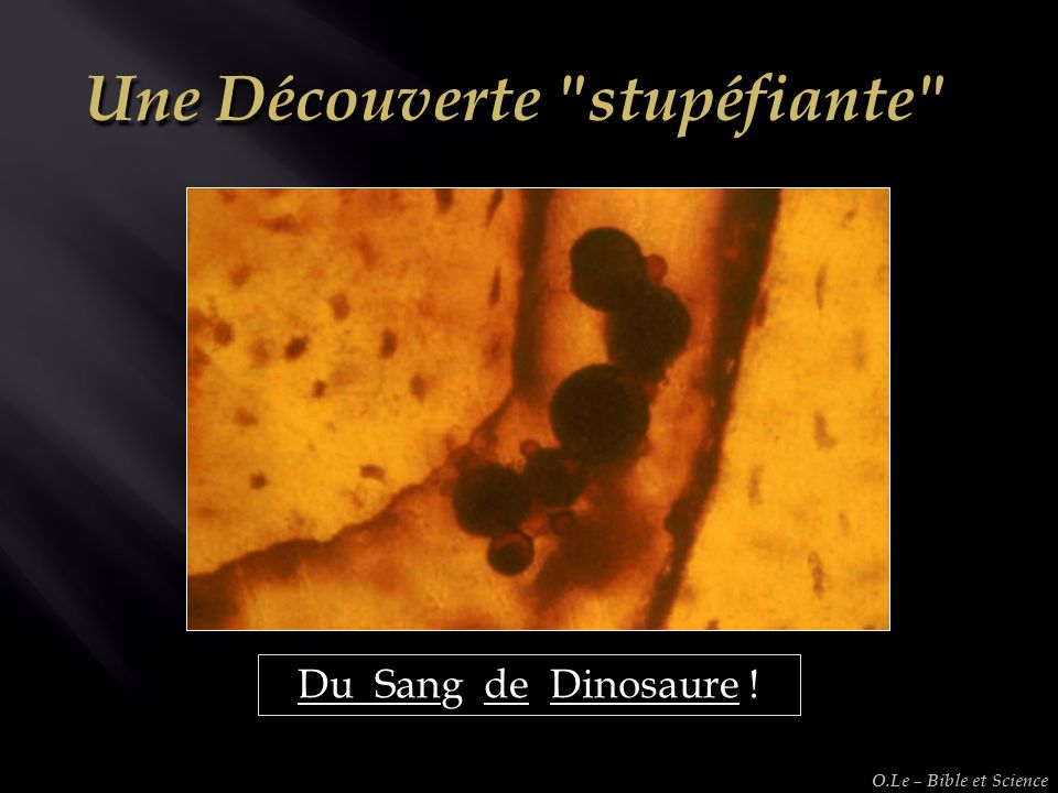 Du Sang de Dinosaure ! O.Le – Bible et Science