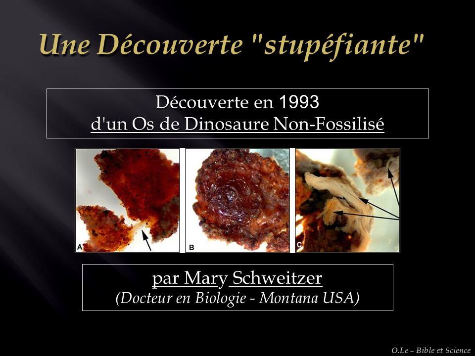 Découverte en 1993 d'un Os de Dinosaure Non-Fossilisé par Mary Schweitzer (Docteur en Biologie - Montana USA) O.Le – Bible et Science