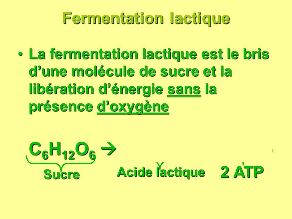 Fermentation lactique Fermentation lactique La fermentation lactique est le bris dune molécule de sucre et la libération dénergie sans la présence dox