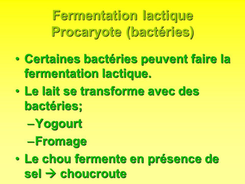Fermentation lactique Procaryote (bactéries) Certaines bactéries peuvent faire la fermentation lactique.Certaines bactéries peuvent faire la fermentat