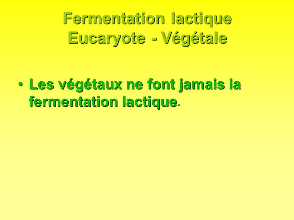 Fermentation lactique Eucaryote - Végétale Les végétaux ne font jamais la fermentation lactiqueLes végétaux ne font jamais la fermentation lactique.