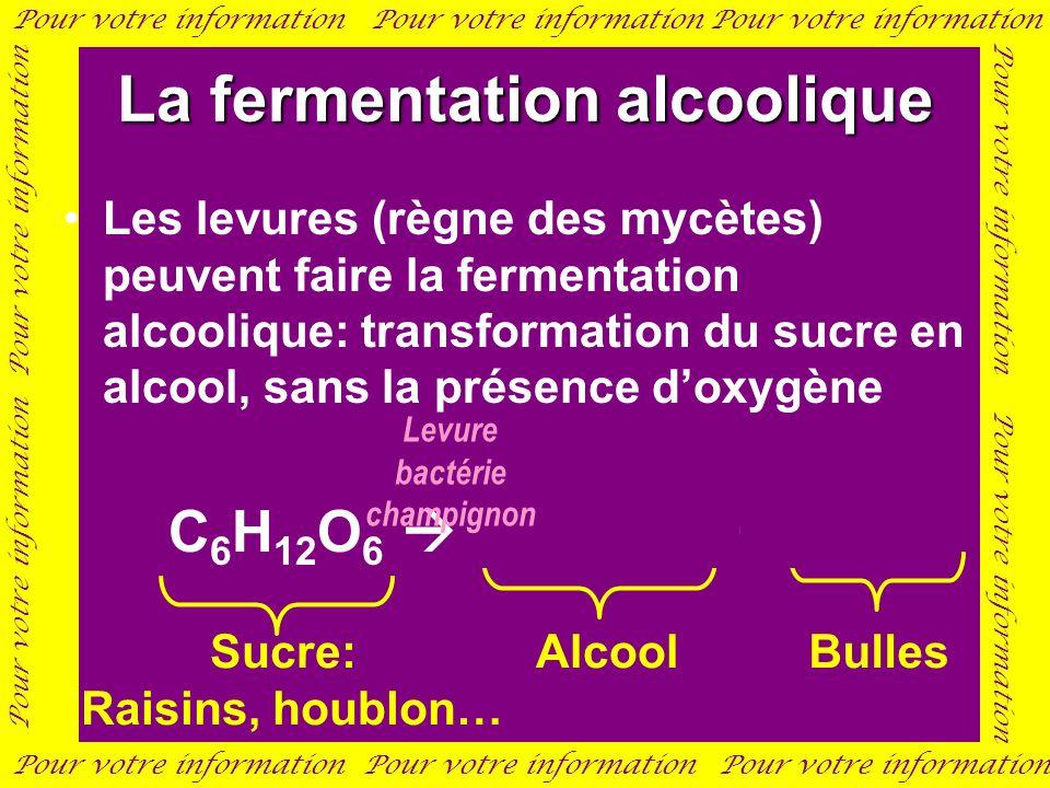 La fermentation alcoolique Les levures (règne des mycètes) peuvent faire la fermentation alcoolique: transformation du sucre en alcool, sans la présen