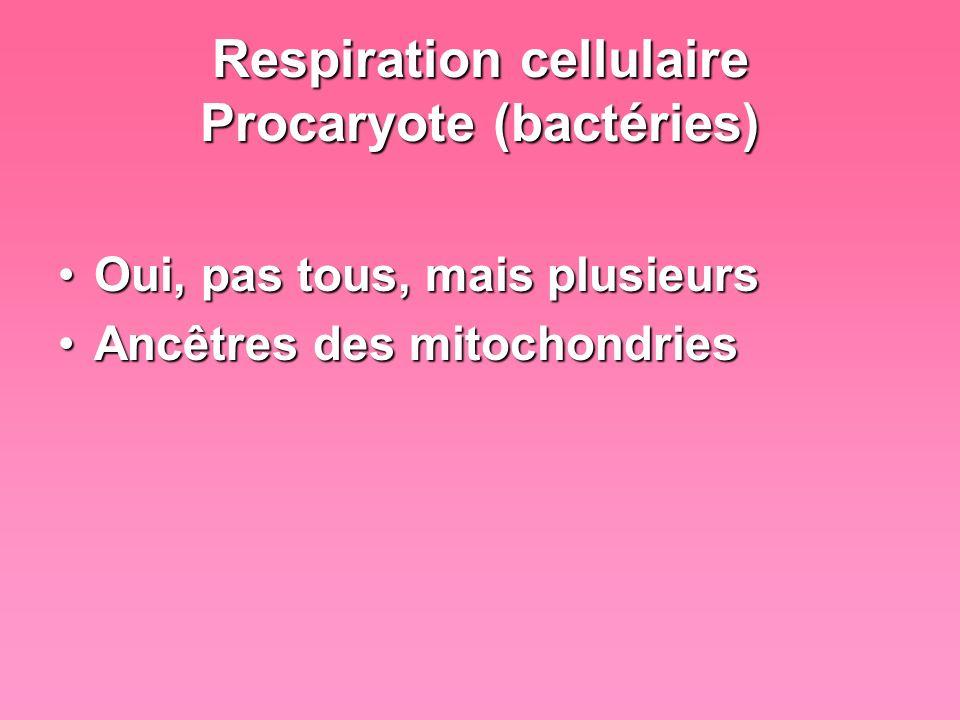 Respiration cellulaire Procaryote (bactéries) Oui, pas tous, mais plusieursOui, pas tous, mais plusieurs Ancêtres des mitochondriesAncêtres des mitoch
