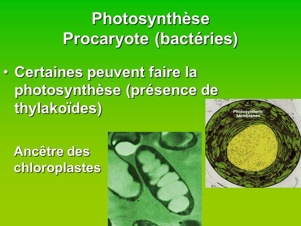 Photosynthèse Procaryote (bactéries) Certaines peuvent faire la photosynthèse (présence de thylakoïdes)Certaines peuvent faire la photosynthèse (prése