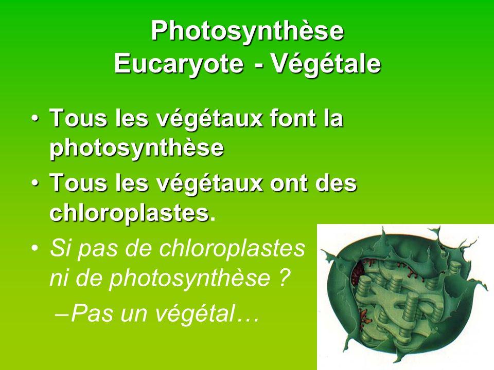 Photosynthèse Eucaryote - Végétale Tous les végétaux font la photosynthèseTous les végétaux font la photosynthèse Tous les végétaux ont des chloroplas