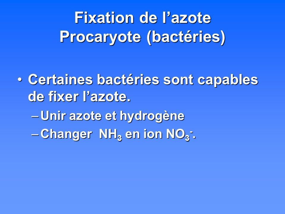 Fixation de lazote Procaryote (bactéries) Certaines bactéries sont capables de fixer lazote.Certaines bactéries sont capables de fixer lazote. –Unir a