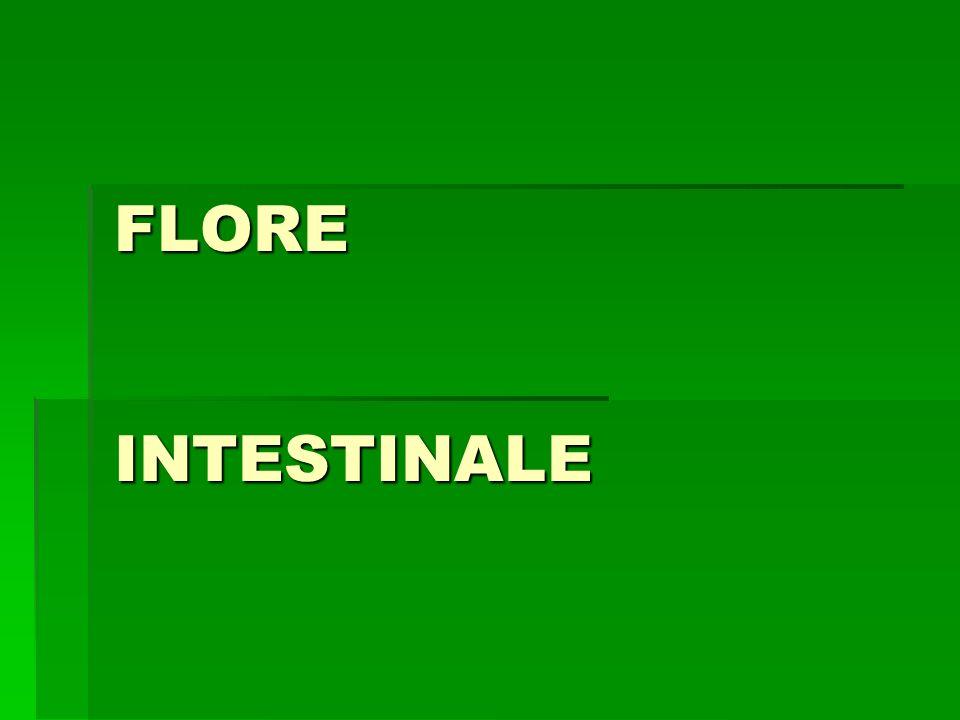 Ecosystème intestinal Flore Flore Système immunitaire (SII) Système immunitaire (SII) Unité fonctionnelle cellules intestinales Unité fonctionnelle cellules intestinales et mucines