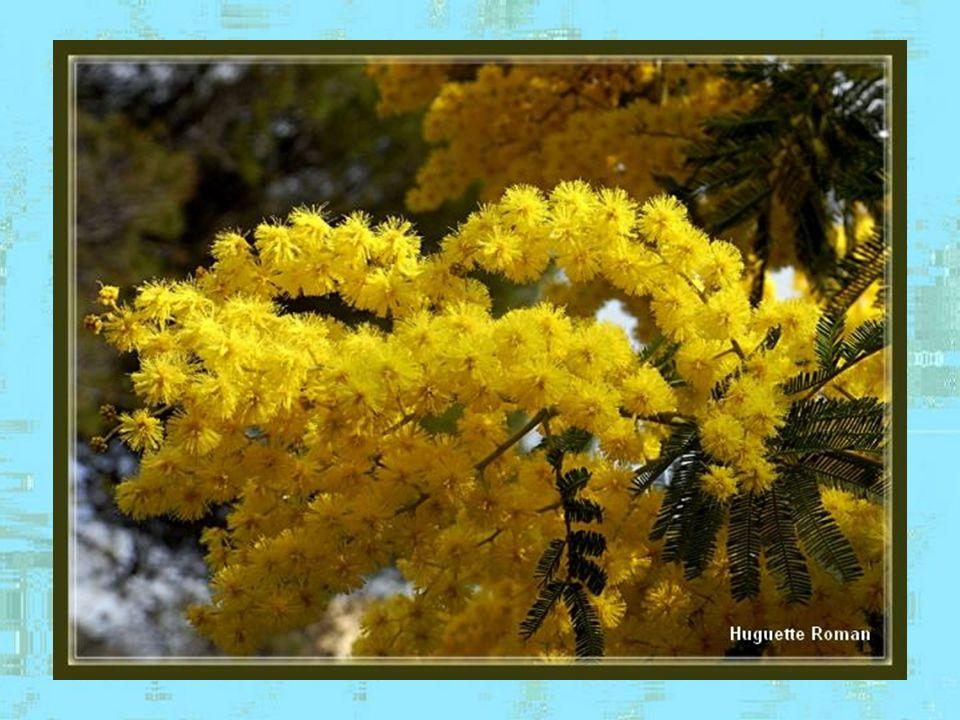 Le long du trajet, on ne peut sempêcher de sarrêter pour admirer les nombreuses hampes florales…