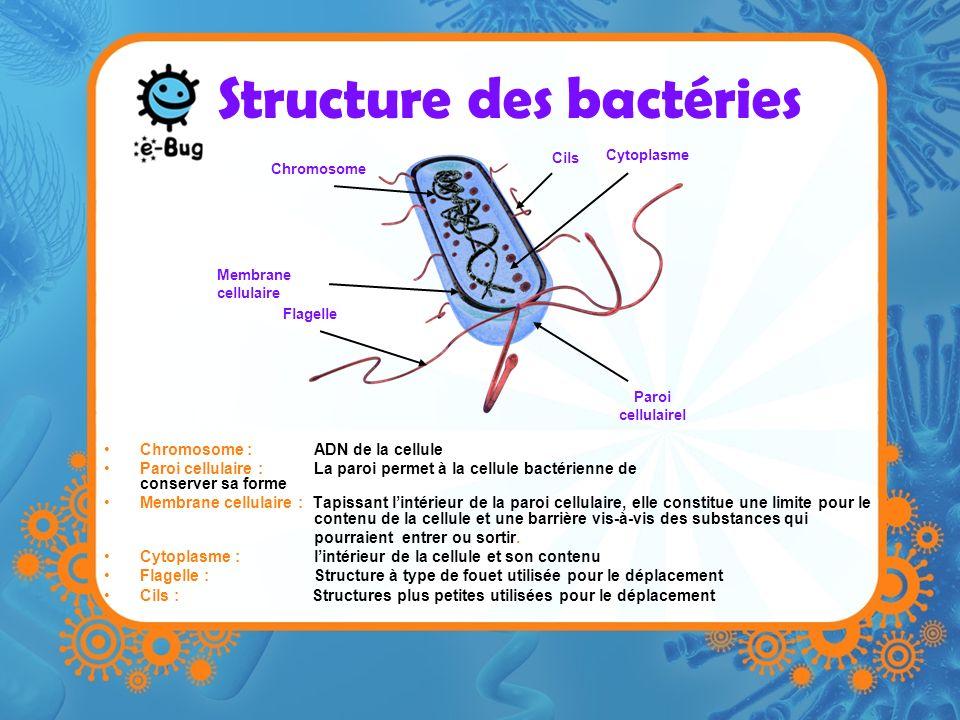 Structure des bactéries Chromosome : ADN de la cellule Paroi cellulaire : La paroi permet à la cellule bactérienne de conserver sa forme Membrane cellulaire : Tapissant lintérieur de la paroi cellulaire, elle constitue une limite pour le contenu de la cellule et une barrière vis-à-vis des substances qui pourraient entrer ou sortir.