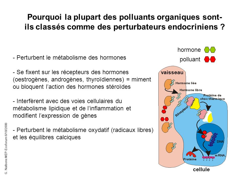 Pourquoi la plupart des polluants organiques sont- ils classés comme des perturbateurs endocriniens ? - Perturbent le métabolisme des hormones - Se fi