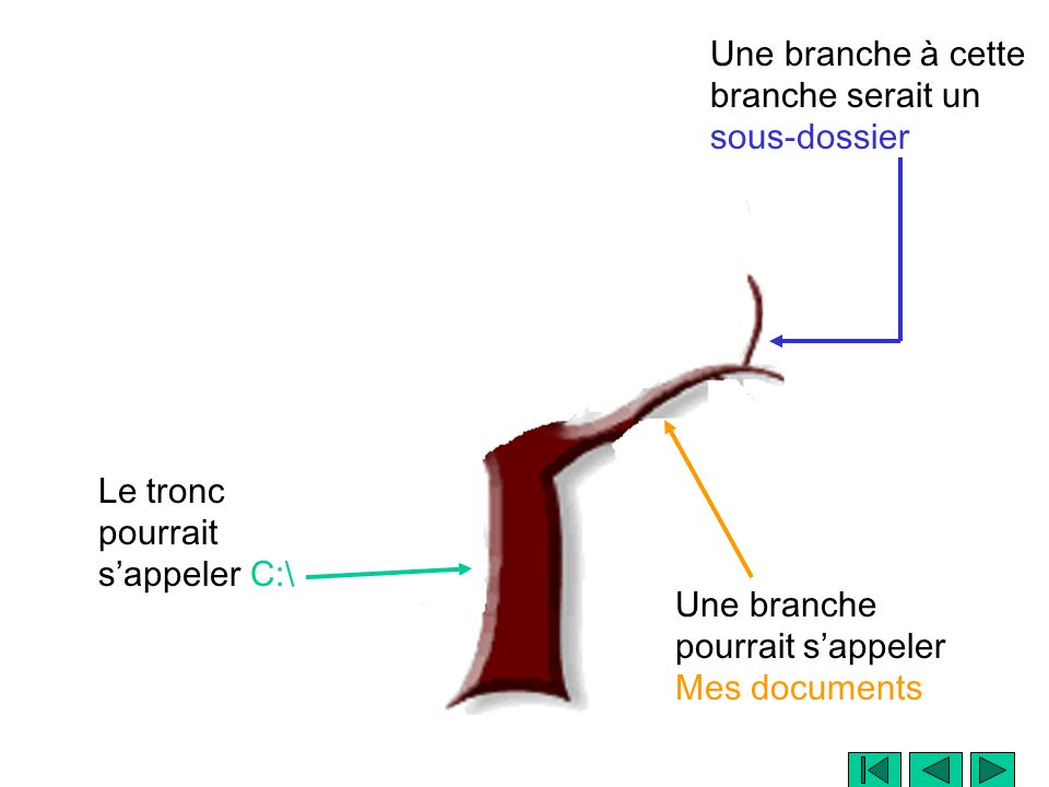 Le tronc pourrait sappeler C:\ Une branche à cette branche serait un sous-dossier Une branche pourrait sappeler Mes documents Et les feuilles seraient les fichiers
