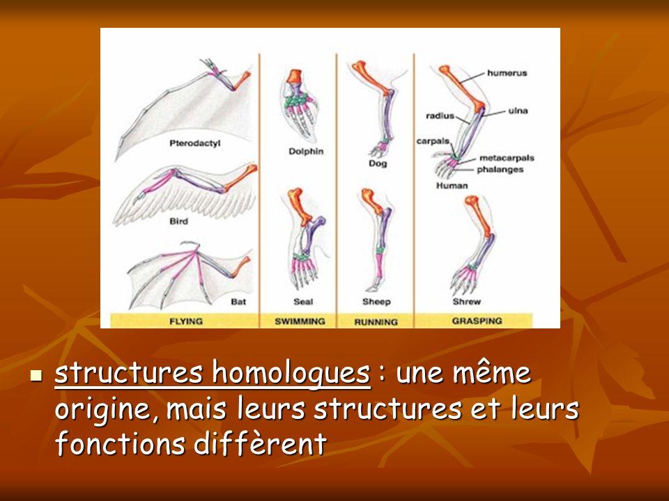 structures homologues : une même origine, mais leurs structures et leurs fonctions diffèrent structures homologues : une même origine, mais leurs stru