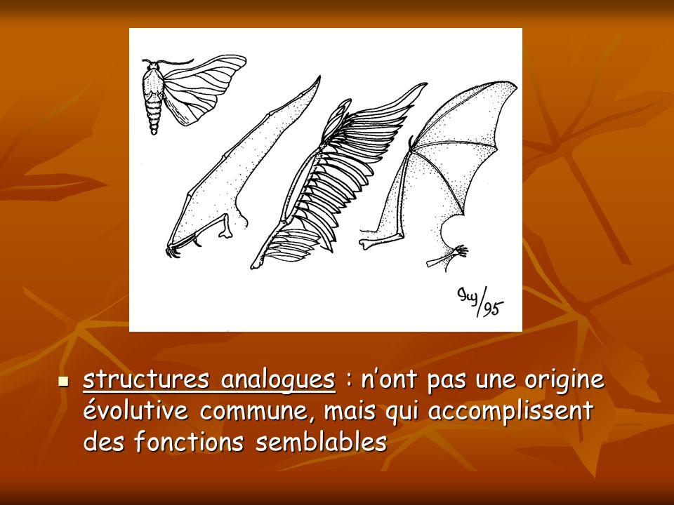 structures analogues : nont pas une origine évolutive commune, mais qui accomplissent des fonctions semblables structures analogues : nont pas une ori
