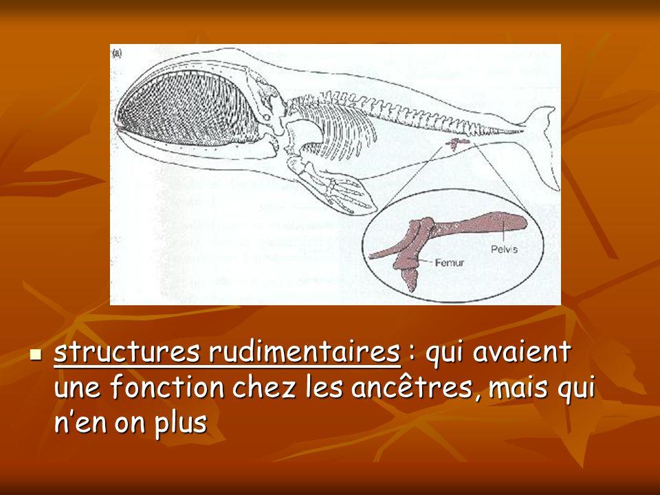 structures rudimentaires : qui avaient une fonction chez les ancêtres, mais qui nen on plus structures rudimentaires : qui avaient une fonction chez l