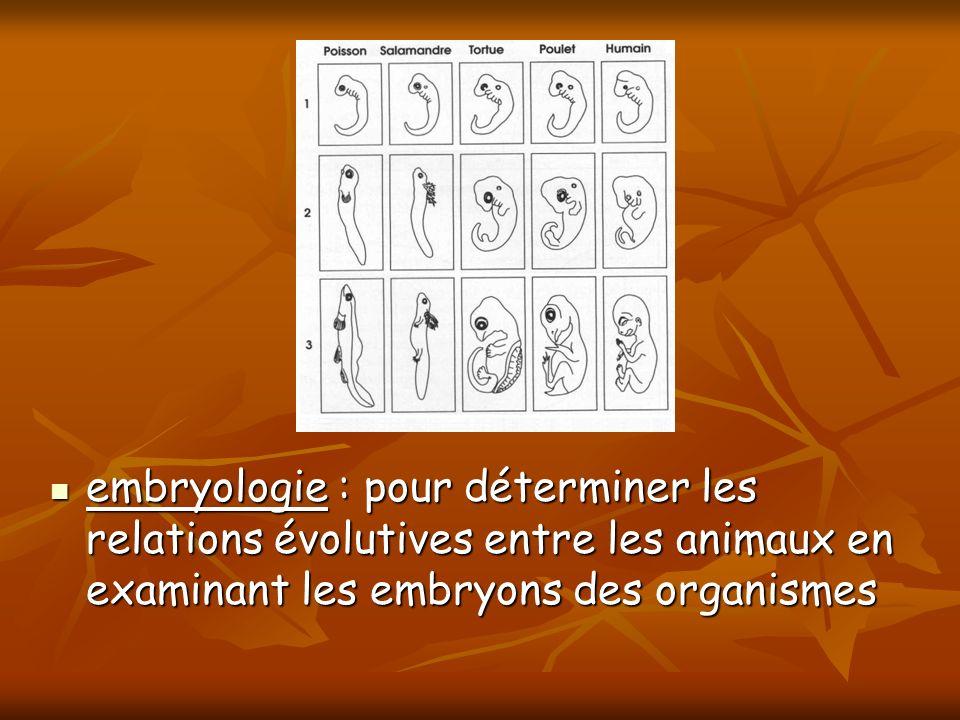embryologie : pour déterminer les relations évolutives entre les animaux en examinant les embryons des organismes embryologie : pour déterminer les re
