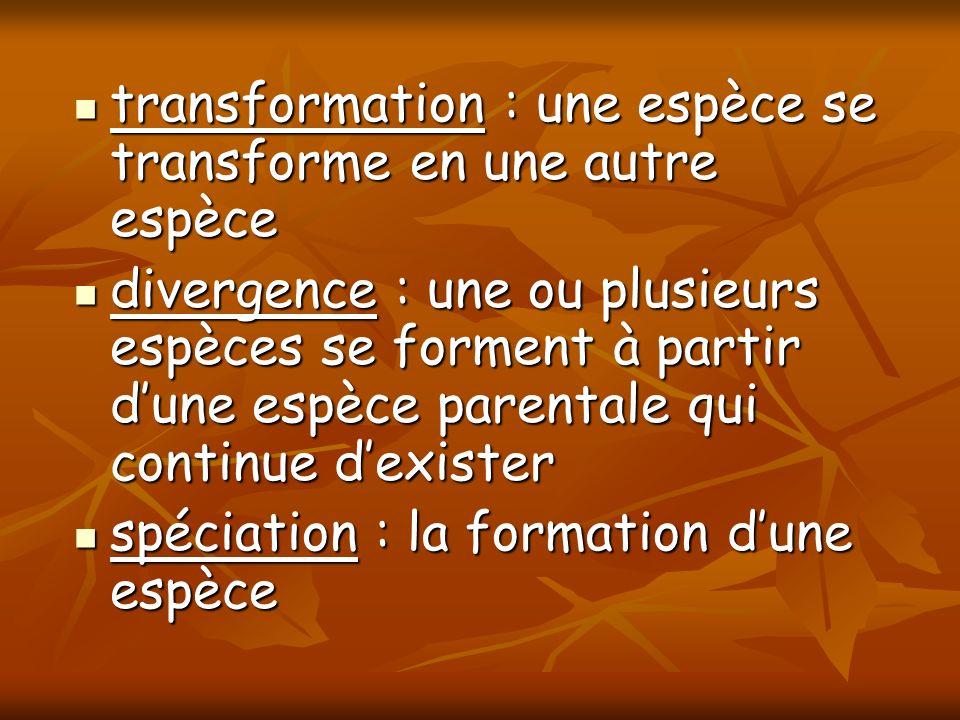 transformation : une espèce se transforme en une autre espèce transformation : une espèce se transforme en une autre espèce divergence : une ou plusie