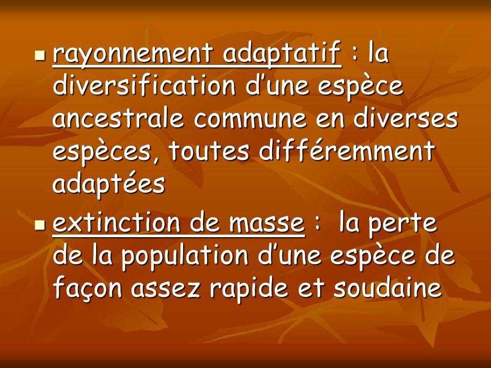 rayonnement adaptatif : la diversification dune espèce ancestrale commune en diverses espèces, toutes différemment adaptées rayonnement adaptatif : la