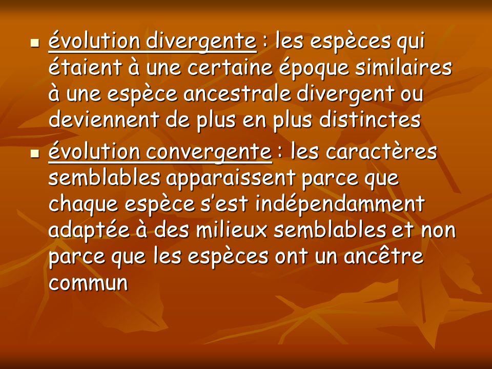 évolution divergente : les espèces qui étaient à une certaine époque similaires à une espèce ancestrale divergent ou deviennent de plus en plus distin