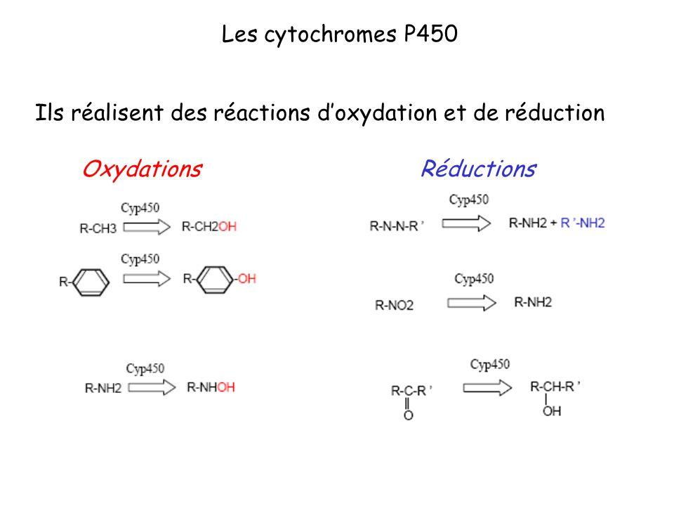Ils réalisent des réactions doxydation et de réduction RéductionsOxydations
