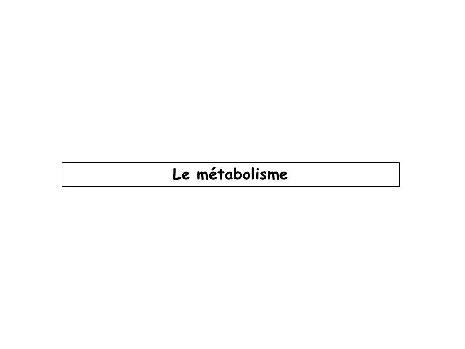 Cest la transformation enzymatique du p.a en un ou plusieurs composés appelés métabolites.