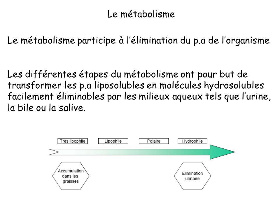 Le métabolisme participe à lélimination du p.a de lorganisme Les différentes étapes du métabolisme ont pour but de transformer les p.a liposolubles en