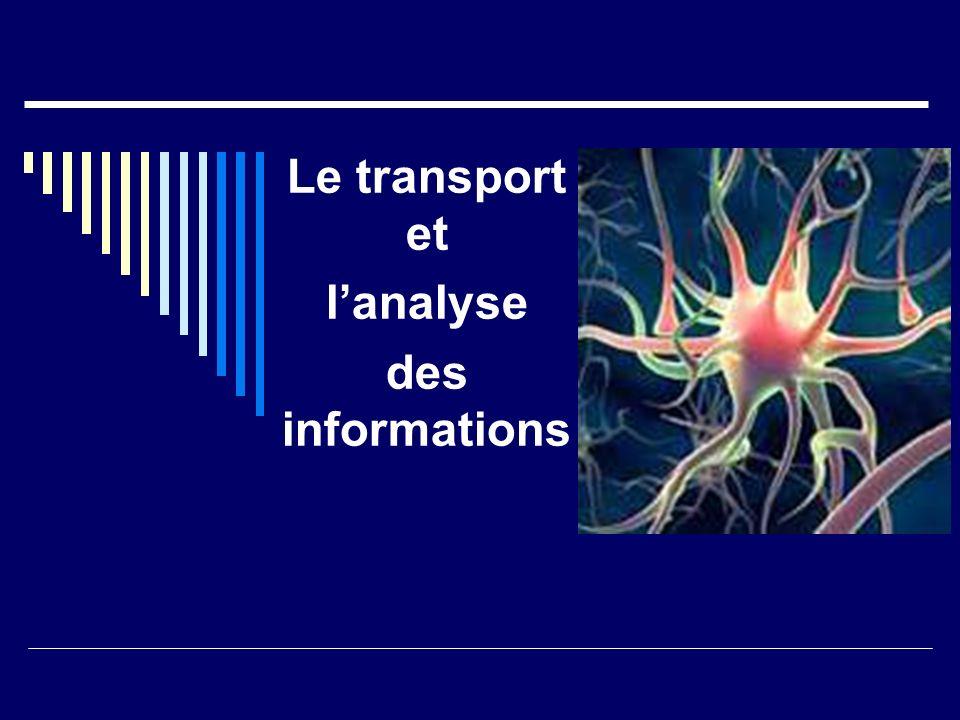 Le transport et lanalyse des informations
