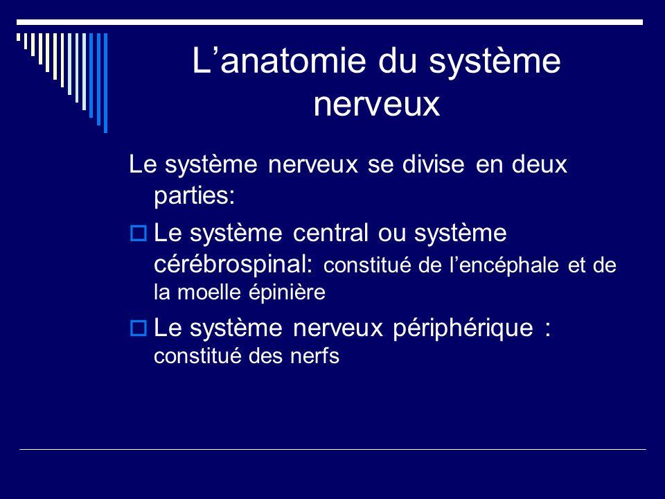 Lanatomie du système nerveux Le système nerveux se divise en deux parties: Le système central ou système cérébrospinal: constitué de lencéphale et de