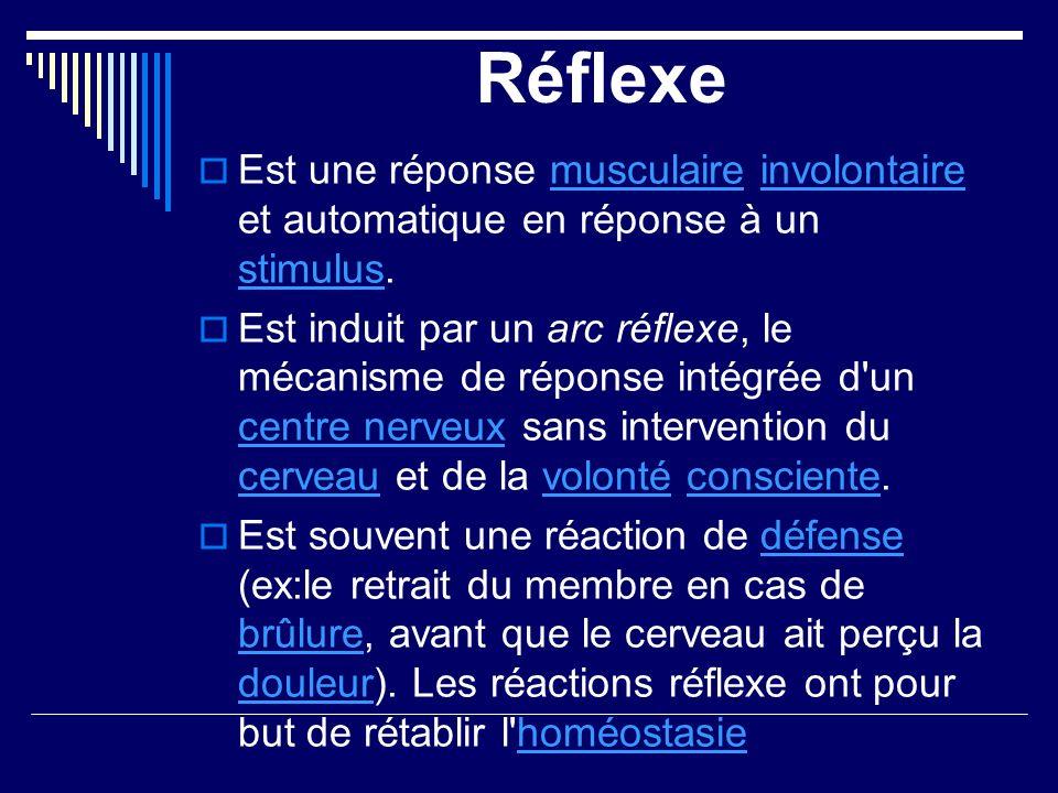 Réflexe Est une réponse musculaire involontaire et automatique en réponse à un stimulus.musculaireinvolontaire stimulus Est induit par un arc réflexe,