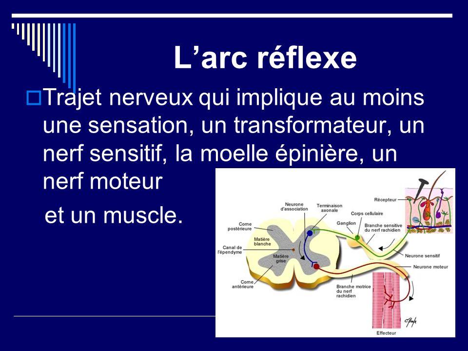 Larc réflexe Trajet nerveux qui implique au moins une sensation, un transformateur, un nerf sensitif, la moelle épinière, un nerf moteur et un muscle.