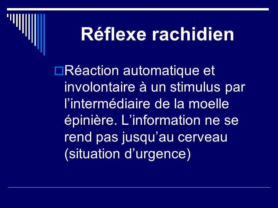 Réflexe rachidien Réaction automatique et involontaire à un stimulus par lintermédiaire de la moelle épinière. Linformation ne se rend pas jusquau cer