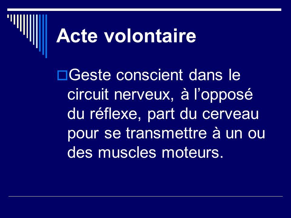 Acte volontaire Geste conscient dans le circuit nerveux, à lopposé du réflexe, part du cerveau pour se transmettre à un ou des muscles moteurs.