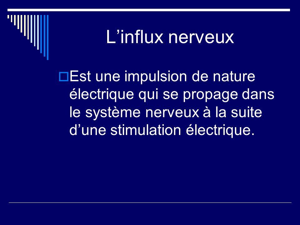 Linflux nerveux Est une impulsion de nature électrique qui se propage dans le système nerveux à la suite dune stimulation électrique.