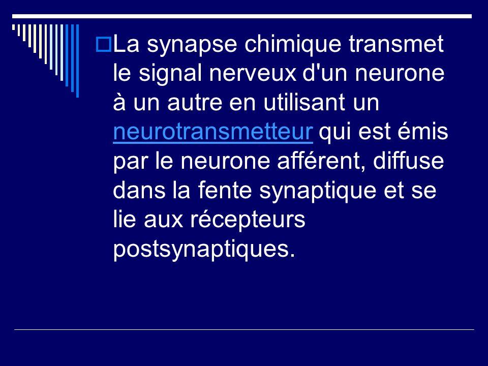 La synapse chimique transmet le signal nerveux d'un neurone à un autre en utilisant un neurotransmetteur qui est émis par le neurone afférent, diffuse