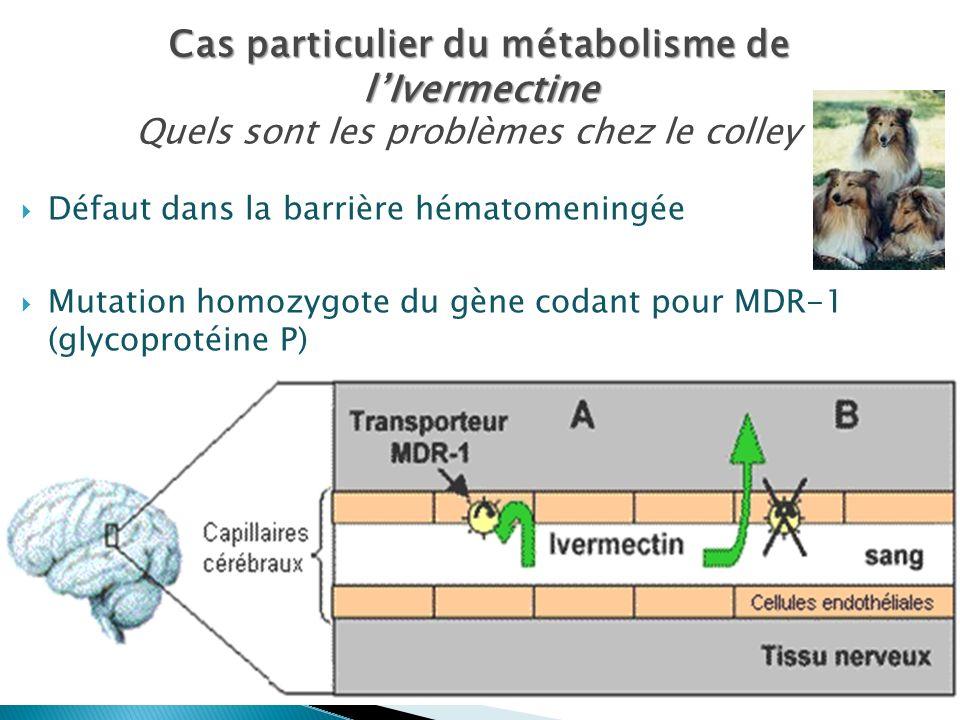 Défaut dans la barrière hématomeningée Mutation homozygote du gène codant pour MDR-1 (glycoprotéine P) Même problème avec lopéramide (antidiarrhéique)
