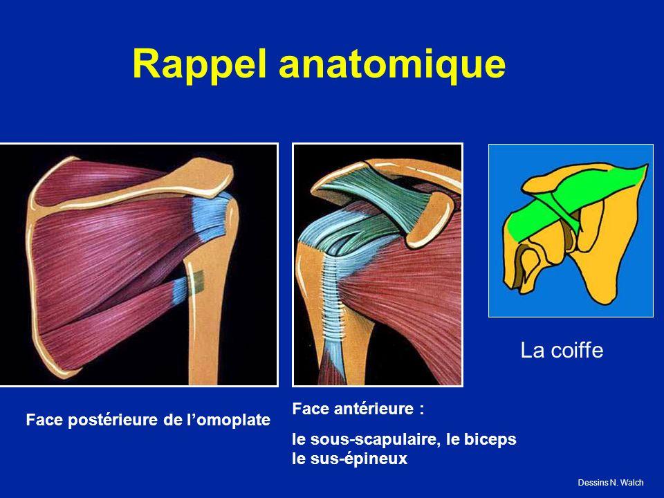 Rappel anatomique Face postérieure de lomoplate Face antérieure : le sous-scapulaire, le biceps le sus-épineux La coiffe Dessins N. Walch