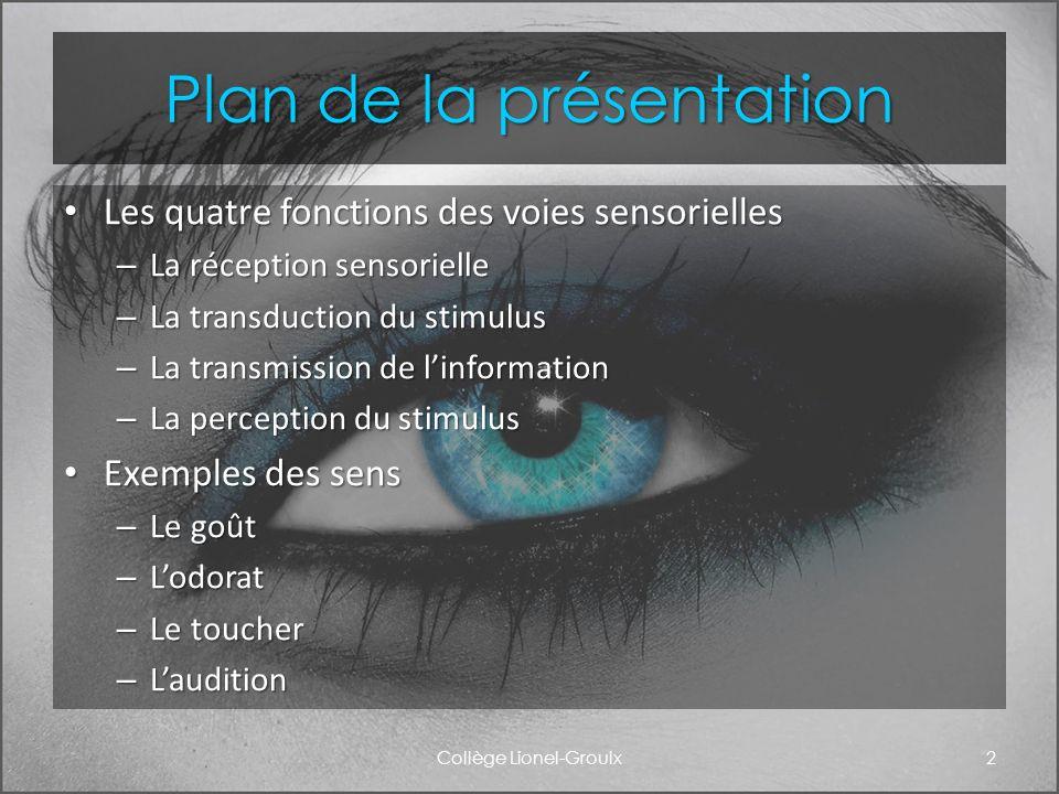 Plan de la présentation Les quatre fonctions des voies sensorielles Les quatre fonctions des voies sensorielles – La réception sensorielle – La transd