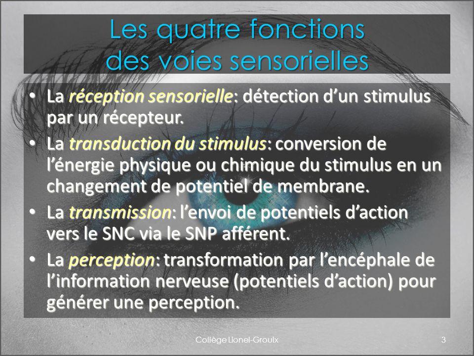 Les quatre fonctions des voies sensorielles La réception sensorielle: détection dun stimulus par un récepteur. La réception sensorielle: détection dun