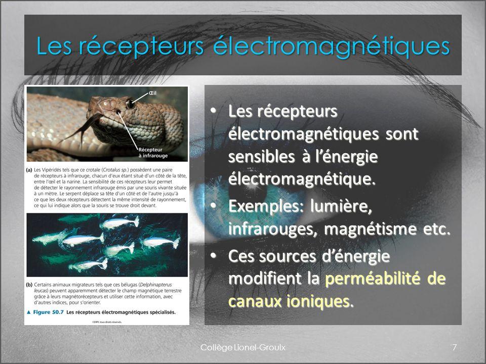 Les récepteurs électromagnétiques Les récepteurs électromagnétiques sont sensibles à lénergie électromagnétique. Les récepteurs électromagnétiques son