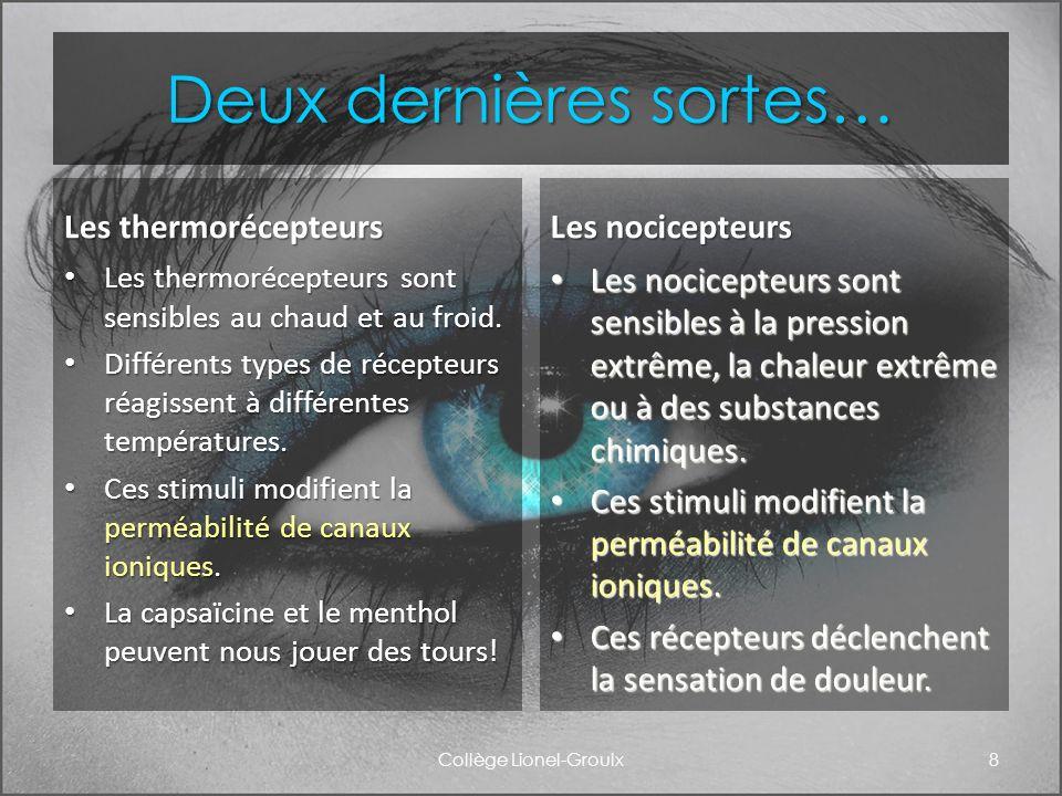 La transmission du stimulus Collège Lionel-Groulx9 Lintégration nerveuse (sommation spatiale ou temporelle) joue un rôle important dans la plupart des voies sensorielles.