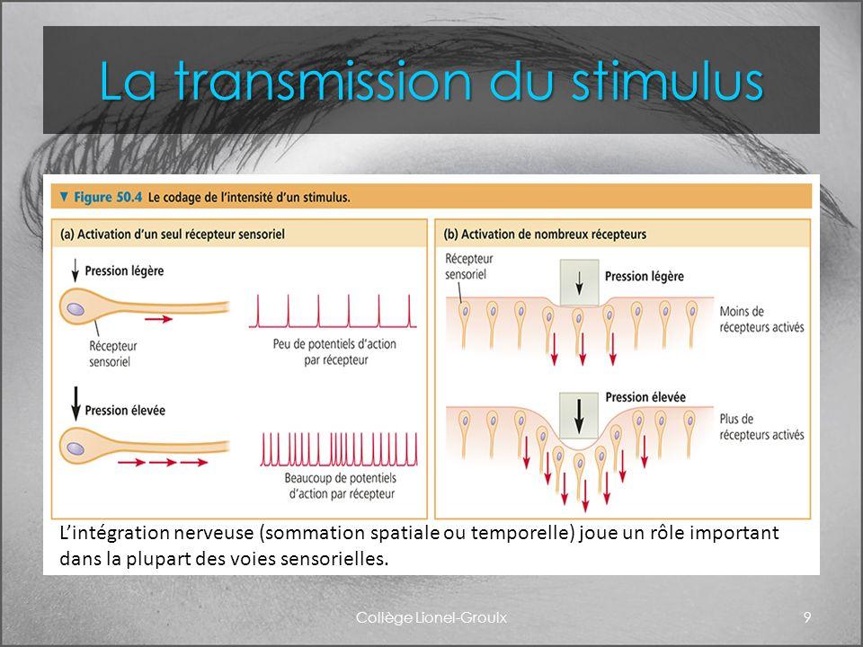 La transmission du stimulus Collège Lionel-Groulx9 Lintégration nerveuse (sommation spatiale ou temporelle) joue un rôle important dans la plupart des