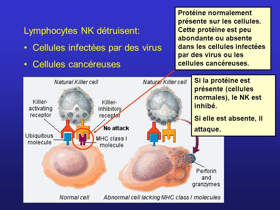 Lymphocytes NK détruisent: Cellules infectées par des virus Cellules cancéreuses Protéine normalement présente sur les cellules. Cette protéine est pe