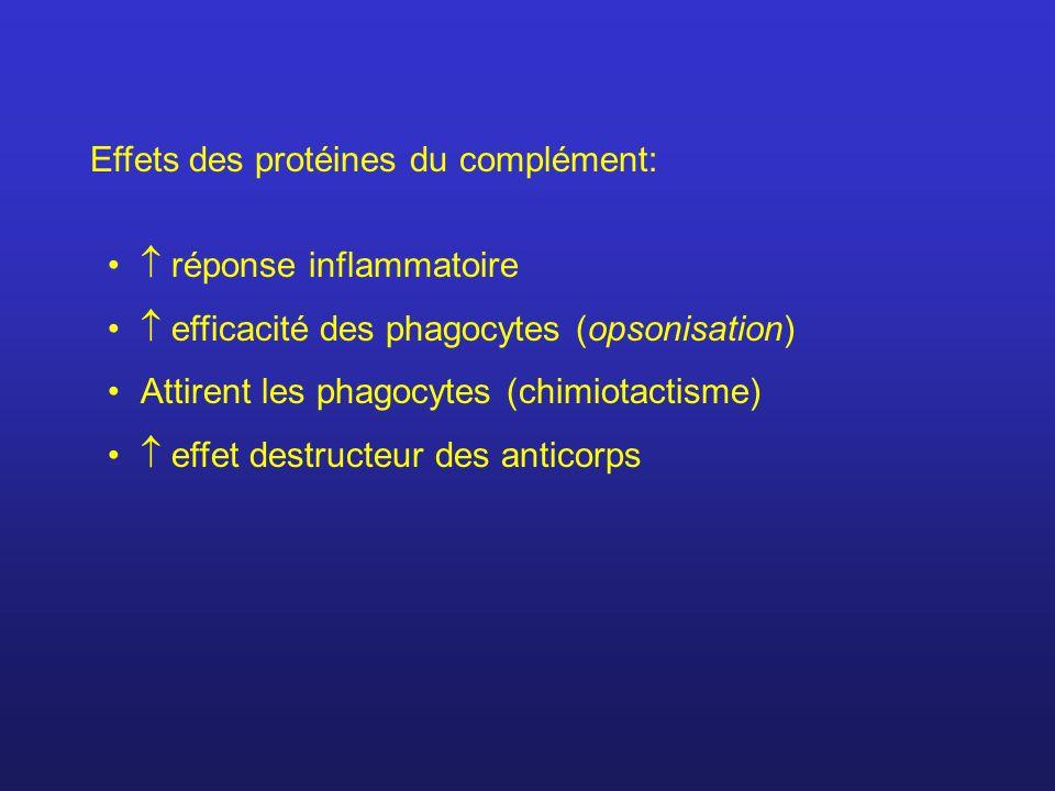 Effets des protéines du complément: réponse inflammatoire efficacité des phagocytes (opsonisation) Attirent les phagocytes (chimiotactisme) effet dest