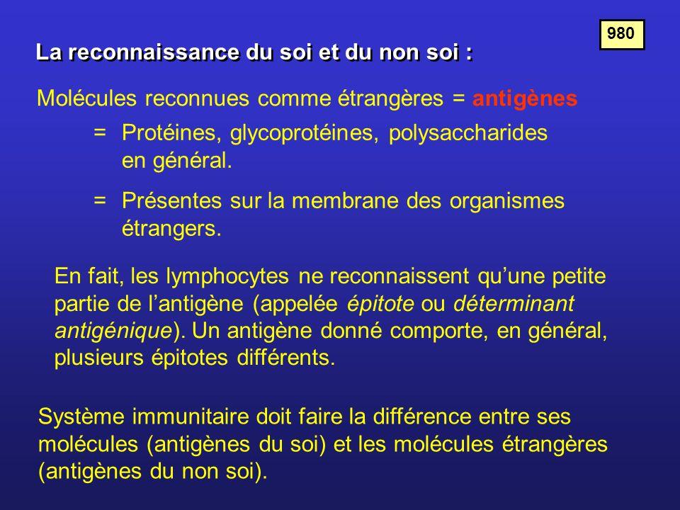La reconnaissance du soi et du non soi : Molécules reconnues comme étrangères = antigènes =Protéines, glycoprotéines, polysaccharides en général. =Pré