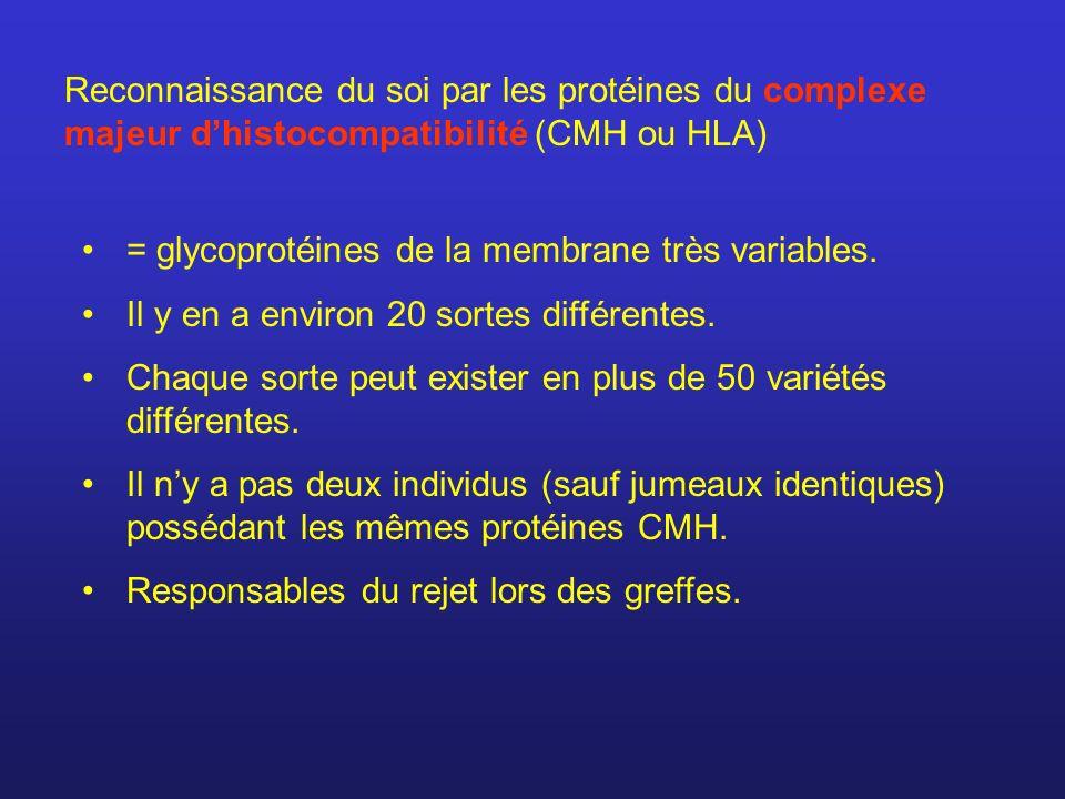 Reconnaissance du soi par les protéines du complexe majeur dhistocompatibilité (CMH ou HLA) = glycoprotéines de la membrane très variables. Il y en a