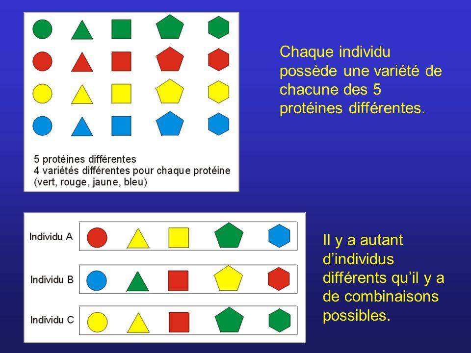 Chaque individu possède une variété de chacune des 5 protéines différentes. Il y a autant dindividus différents quil y a de combinaisons possibles.
