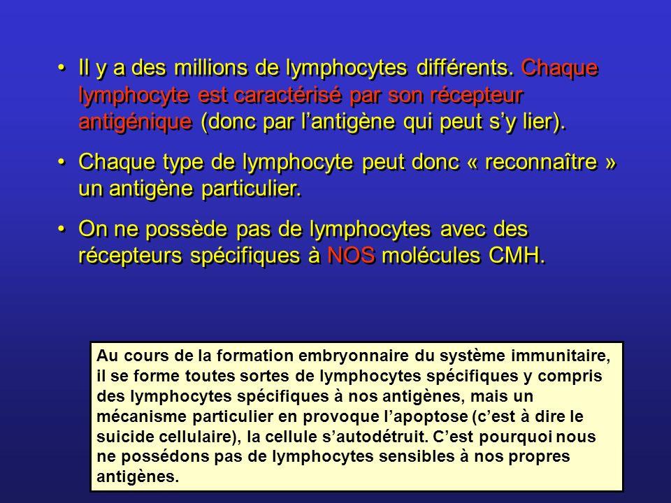 Il y a des millions de lymphocytes différents. Chaque lymphocyte est caractérisé par son récepteur antigénique (donc par lantigène qui peut sy lier).