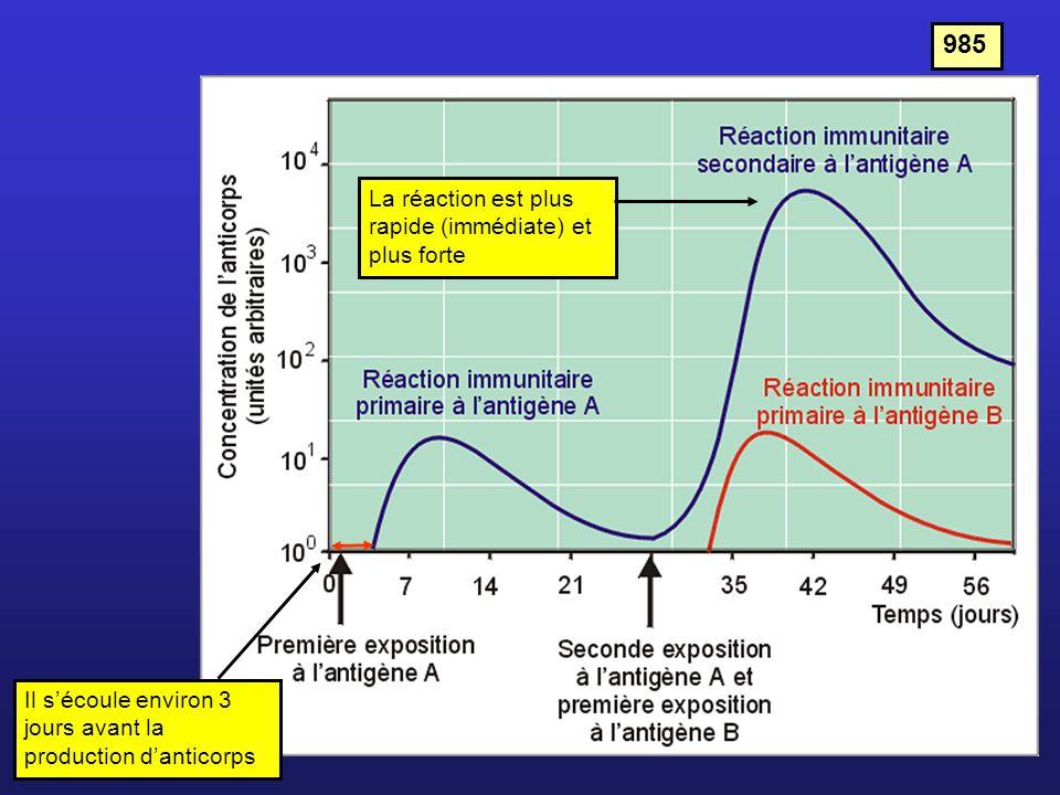 985 La réaction est plus rapide (immédiate) et plus forte Il sécoule environ 3 jours avant la production danticorps