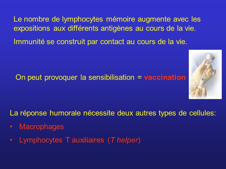 Le nombre de lymphocytes mémoire augmente avec les expositions aux différents antigènes au cours de la vie. Immunité se construit par contact au cours